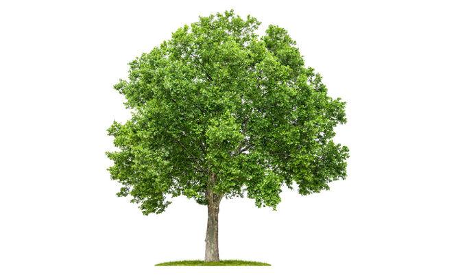 L 39 arbre de la propri t voisine d passe chez moi que dois je faire sabrina rouzes avocat - Article 673 code civil ...